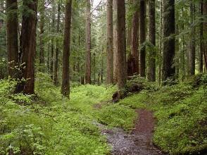 Рекорден брой от 370 000 проверки са извършени в горските