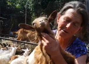 Снимка: Иван Бакалов: Да избиеш животните заради 10 заразени овце, е все едно да избиеш цял град заради 10 болни от грип